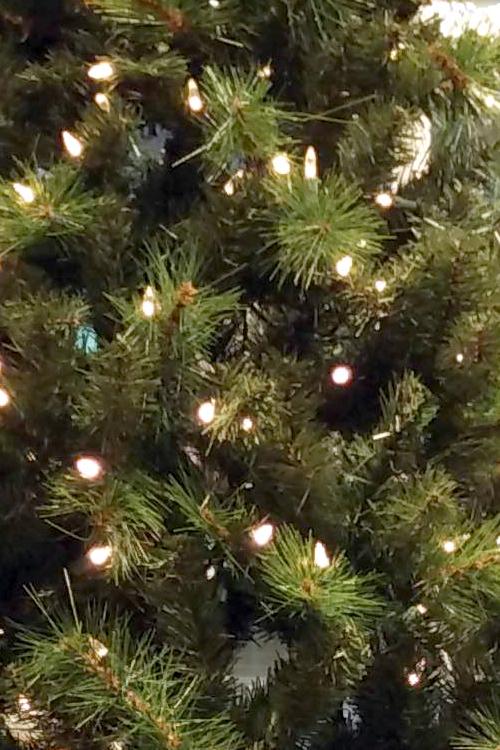 Seymour Pine Lights 7ft 21m